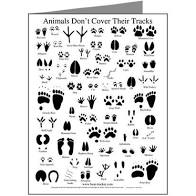 "animal tracks poster entitled ""Animals Don't Cover Their Tracks"""
